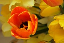 Flowers / Color of flowers