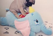 Pugs riding elephants