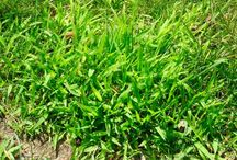 Yard Weeds & Diseases / Learn all about weeds & lawn diseases and how to prevent them