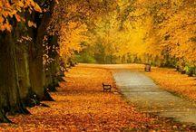 Sonbahar / Autumn