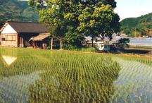 Panorami giapponesi / Vedute di ambienti naturali e antropizzati