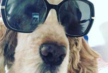 Dog's ❤️