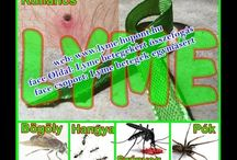 #Lyme-kór Krónikus Lyme-kór