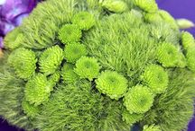 Green Flowers / by AboutFlowers