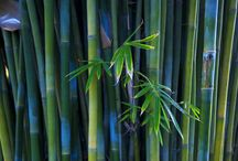 Bamboo Love! / by Brian Berry