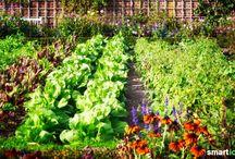 Garten /Pflanzen