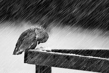 Rain / Images of rain