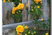zahrada / zahradničení