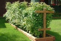 idées jardin