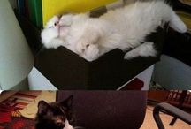 котыкы