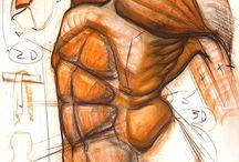 anatomia-tronco