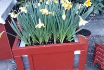 Gardening de Milo / Our home garden ....