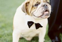 Wedding Pets / by Lanier Islands Legacy Weddings