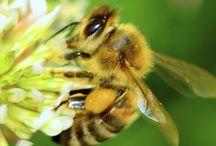 Honey News