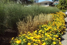 Landscaping / by Cindy-Lou Gibson