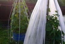 Сад и огород идеи