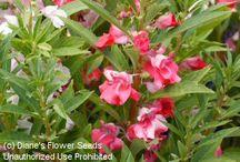 La box florale d'Avril / Retrouvez la box florale Cultiver son jardin composée de toutes les graines du mois d'Avril ! http://www.cultiversonjardin.fr/box/39/Box-Florale-d-Avril