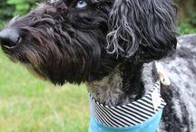 Dog Must Haves / Dog Bandanas