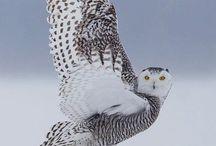 Animal Kingdom / Stunning, majestic, adorable creatures