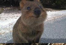 I need a quokka too! / by Karen Zinn