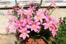flowers-greenery-garden