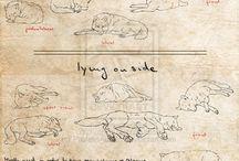 vlky a líšky