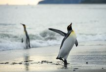 Wonderful World of Penguins / by Danielle Cortez