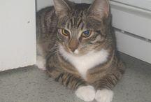 Kissat / Valokuvia kissoistani Casperista ja Oscarista sekä muita kissa-aiheisia juttuja