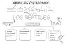 rèptils