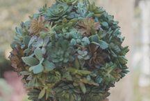 vícios de plantas