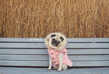 Pugs / by Theresa Dent