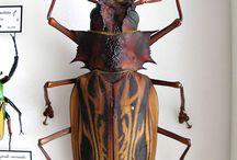 insectos asombrosos
