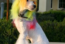 Creative Dog Grooming / Some inspirational pins of creative grooming curated from around the web.