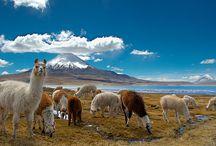 XV regiòn de Arica e Parinacota