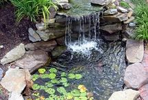WATER FEATURES /PONDS -PLANTS