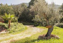 Radlerträume auf Mallorca / Wir haben Fincas ausgewählt, die sowohl dem Profi als auch dem normalen Fahrradfahrer zusagen. Die Finca ist dabei meist Startpunkt für schöne Radtouren in die Umgebung. Auf diese Weise können Sie die Insel ganz anders entdecken. Einige Fincas bieten sogar Fahrräder zum Verleih an, teilweise kostenlos.
