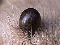 Flea & Tick Prevention / A variety of info on flea & tick prevention.