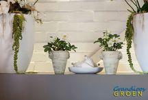 Kerst / Bloemen en planten die bij kerst horen en je interieur opfleuren.