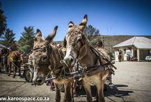 Zuid Afrika donkey kar