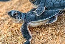 Želvi