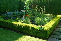 Mixing Edibles in the Garden / Herbs & veggies are wonderful planted among your ornamentals and perennials.
