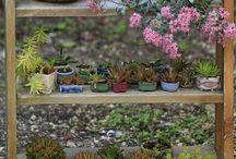 Jardins & invencionices