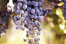 Paisajes / Paisajes de Tupungato y Barrancas donde cosechamos nuestras uvas.