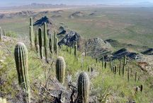 Clients - FIF: Friends of Ironwood Forest National Monument