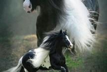 Horses are my fav / by Ashley Braun