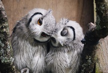 Well owl-righty then!  / by Tattered Turquoise