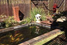 Our garden / Koi pond and japanese garden