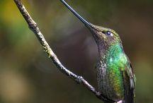 Birds<3 / by Kristie Luther