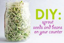 Sprouts and Microgreens / by Rekesha Spellman