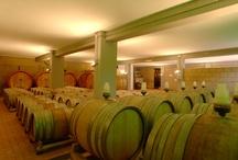 Botti e Bariques / Le uve con cui vengono prodotti tutti i vini delle Cantine Dragani sono attentamente selezionate in base alle diverse zone di provenienza e alle caratteristiche tipiche del vitigno. L'azienda segue l'iter completo, dalla coltivazione delle vigne all'imbottigliamento, avvalendosi di un'efficientissima rete distributiva che porta in giro per l'Italia e per il mondo i diversi formati delle sue bottiglie.